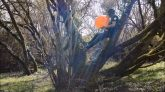 Blow-to-pop-spray-balloon-in-a-tree