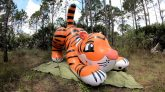 7-Foot-Long-Pouncing-Tiger-Time-Lapse-Deflation