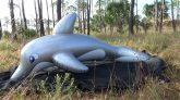 Barados-the-Dolphin-Inflation