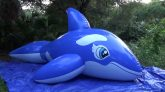 Blue-Five-Meter-Whale-Inflation
