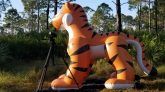Giant-Standing-Tiger-Deflation