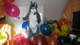 Playing-and-popping-balloons-in-a-fursuit-part-29