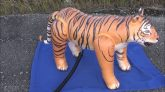 Popping-Jet-Creations-Small-Bengal-Tiger