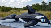 Black-Five-Meter-Whale-Time-Lapse-Deflation