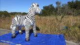 Inflatable-World-Zebra-Time-Lapse-Inflation