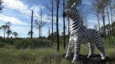 Jet-Creations-Zebra-Time-Lapse-Inflation
