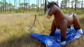 Brown-Blow-Up-Horse-Time-Lapse-Deflation