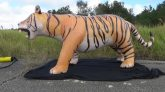 Jet-Creations-Bengal-Tiger-Time-Lapse-Deflation